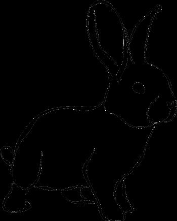 Hasen und Kaninchen Namen, männliche und weibliche