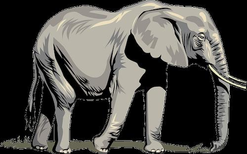 Elefanten Namen männlich und weiblich