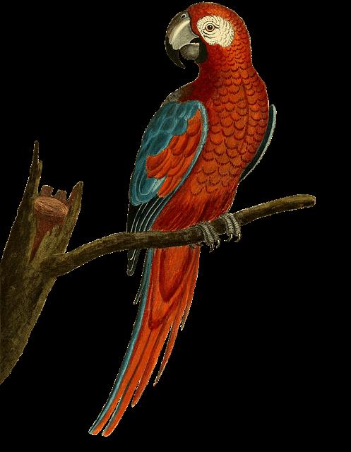 vogelnamen männlich