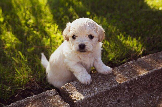 Hundenamen für kleine, männliche und weibliche Hunde entdecken