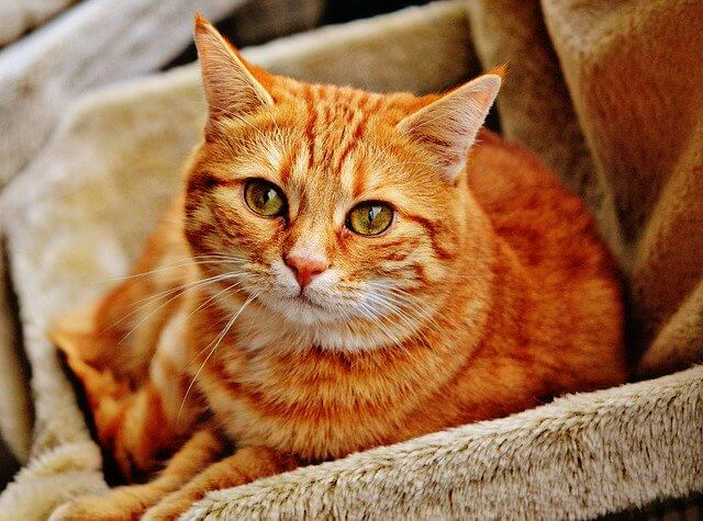 Namen für männliche und weibliche rote Katzen