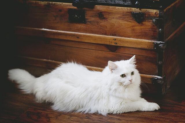 Namen für weiße Katze finden