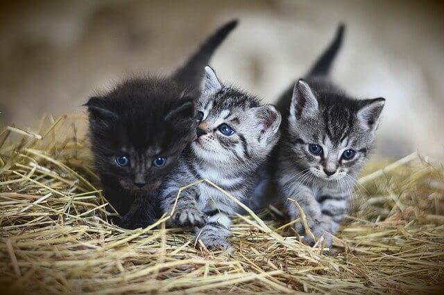 Süße und Coole Katzennamen für Jungs entdecken
