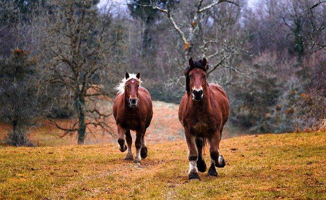 Sind Beliebte Pferdenamen auch die besten?