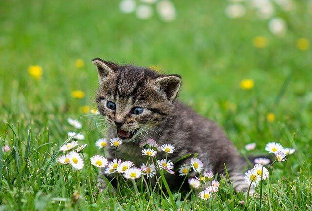 Wie finde ich gute Katzennamen für männliche und weibliche Tiere?