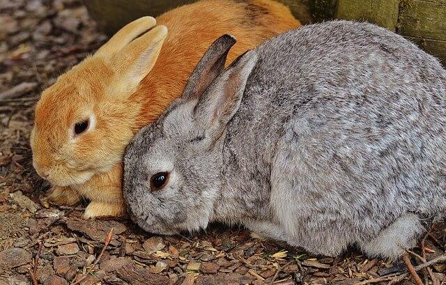 Schöne, Süße und Ausgefallene Kaninchennamen für männliche und weibliche Tiere