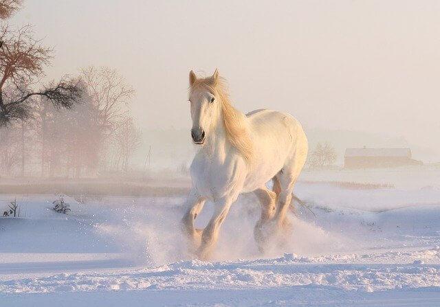 Süße Pferdenamen für Hengst und Stute