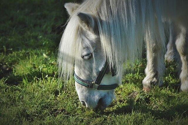 Unsere Top 30 der süßen Pony Namen