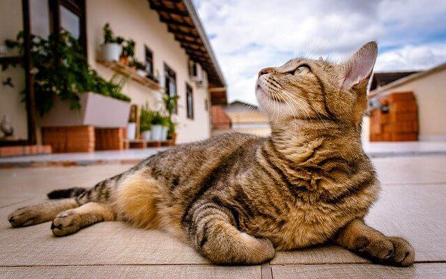 coole Katzennamen für männlich und weiblich Vorschläge