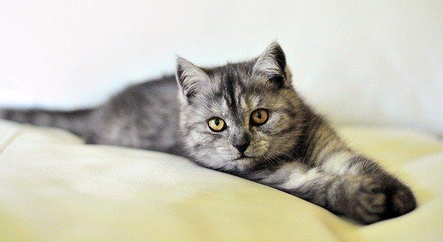 exotische Katzennamen für männlich und weiblich finden