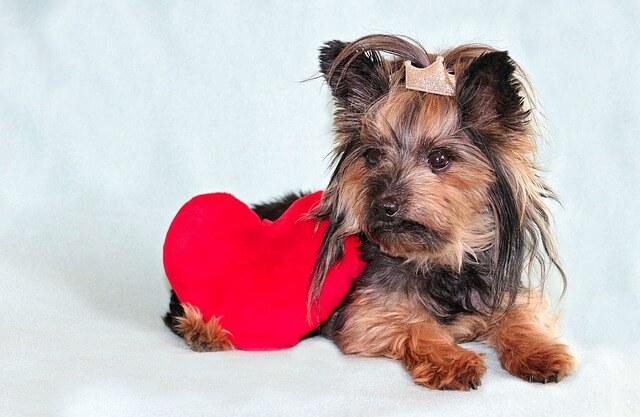 Hundenamen mit Bedeutung Liebe finden