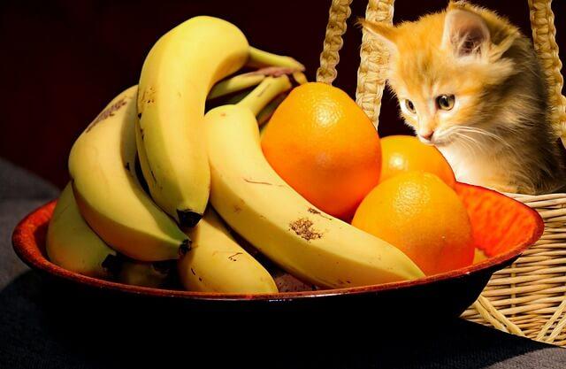 Katzennamen inspiriert durch Obstsorten