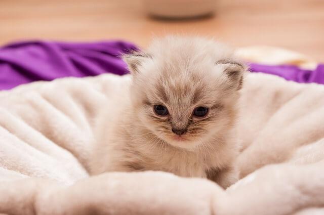 Katzennamen für Cremefarbenes Fell, männlich und weiblich