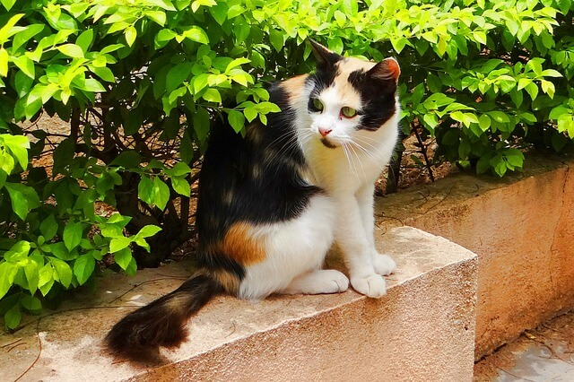 indische Katzennamen entdecken für männliche und weibliche Tiere